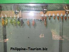 World Of Butterflies Marikina